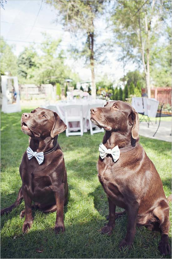 Blumenmädchen Für Die Hochzeit