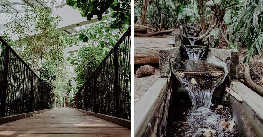 Wundervoller Einblick in die tropische Welt der Biosphäre Potsdam (c) christineladehofffotografie