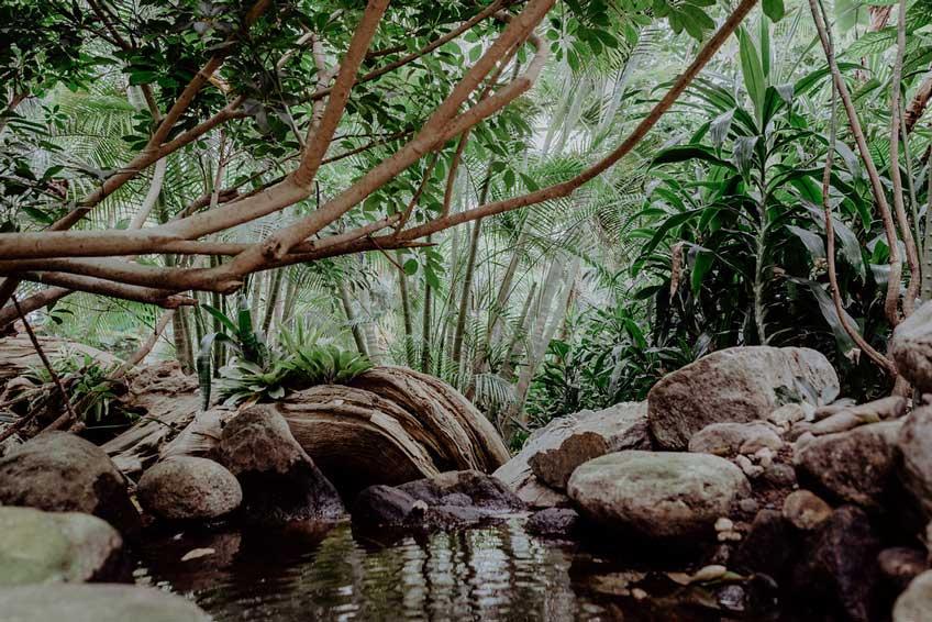 Kleiner Teich in der tropischen Welt der Biospähre Potsdam.