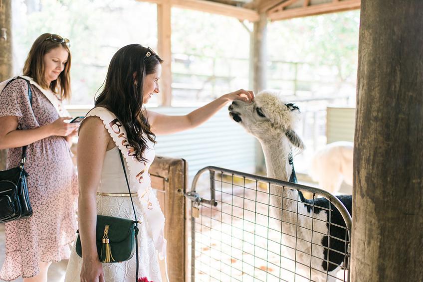 Tierischer Spaß auf der Bridal Shower - In Australien gibt es faszinierende Zoos und Tierparks