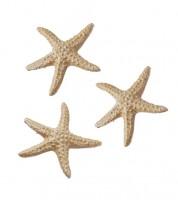 Seesterne aus Polyresin - 4 cm - 3 Stück