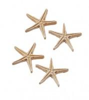 Seesterne aus Polyresin - 2,8 cm - 4 Stück